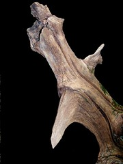 PREHISTORIC CREATURE (LinBow) Tags: tree dark fly searchthebest oneofakind fantasy creature prehistoric blueribbonwinner supershot abigfave impressiveimages wowiekazowie onlythebestare