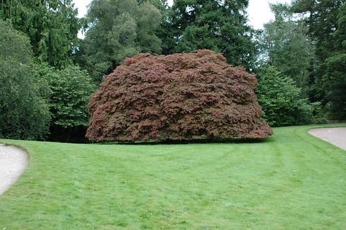 Cawdor Castle - Un arbre champignon