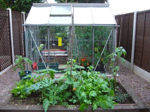 veg garden 004