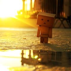 Reflecting Sunset (willycoolpics.) Tags: sunset summer pool sunshine puddle action figure huh picnik goldenhour danbo revoltech danboard morelikegoldenacoupleminutes someonehassaidthatbefore