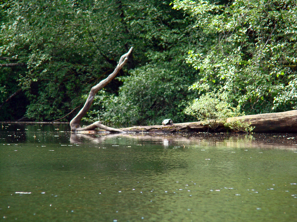 2010-06-07 Thetis Lake 044