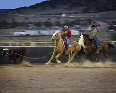 Training at Cubero (Dave Arnold Photo) Tags: horse usa newmexico southwest west cow us photo cowboy cattle image picture pic rope images arena photograph western sw lariat nm calf noose roper roping oldwest swusa desertsouthwest calfroping westernusa ropers cubero davearnold ropingcompetition americancowboy cowroping westerncowboy nmex cattleroping davearnoldphoto ridingcowboy