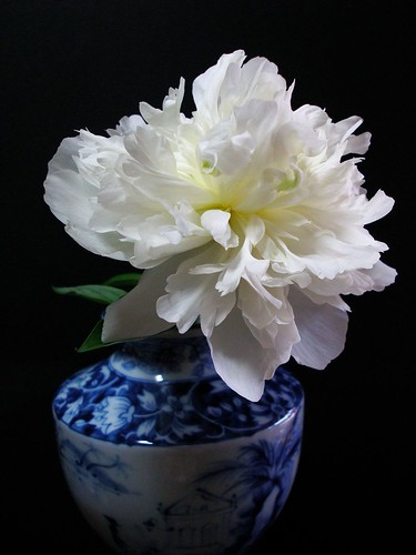 peony in a vase by tanakawho on flickr