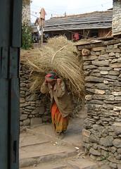 DSCF0007_edited (Flashard66) Tags: nepal fujifinepix jomson khatmandu