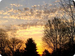 nearly spring morning (indielove) Tags: trees shadow sky nature clouds sunrise indiana photo365