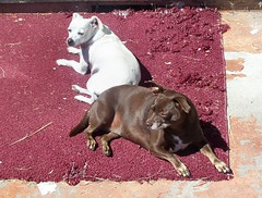 Q&H sunbath