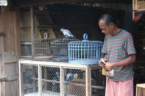 Yogyakarta bird market...