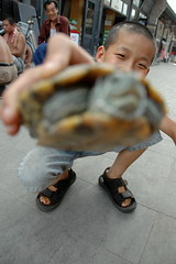 U-gwai (Rafal Bergman) Tags: china boy kid child turtle chinese aplusphoto pingjao