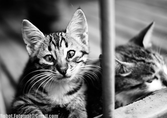 Chernobyl Kitten
