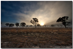 Foggy Morning (Sam Ili) Tags: morning sky sun tree fog sunrise harrison australia canberra hdr photomatix gungahlin explored 450d redbubble canon1022mm3545