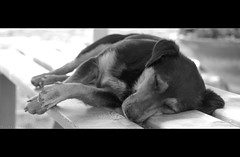 Just having my Sista ([ Michel ]) Tags: sleeping blackandwhite italy dog bench blackwhite sicily michel tamron itali 70mm sicili 18270 peachful tamron18270 tamron18270mm 18270mm michelphotography isolasanpantaleo justhavingmysista