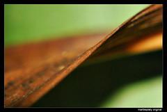 decayed abstraction1_hf (marbleplaty) Tags: macro june nikon bicol assorted 2010 daraga legazpi albay d80 marbleplaty paoloarroyo