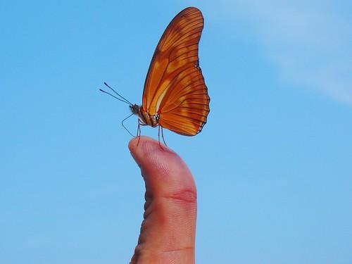 Mariposa en mi mano (11)