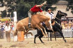 El gateado malacara (Eduardo Amorim) Tags: horses horse southamerica caballo uruguay cheval caballos cavalos prado montevideo pferde cavalli cavallo cavalo gauchos pferd hest hevonen chevaux gaucho  amricadosul montevidu hst uruguai gacho  amriquedusud  gachos  sudamrica suramrica amricadelsur  sdamerika jineteada   americadelsud gineteada  americameridionale semanacriolla semanacriolladelprado eduardoamorim iayayam yamaiay semanacriolladelprado2010