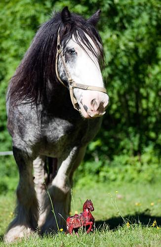 Två vackra hästar