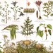1906 Toxic Plants Victorian Botanical Chromolithograph Print
