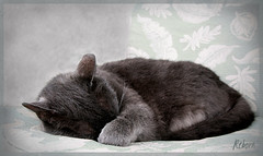 Sweet Sleep (ReneYoshi) Tags: pet cat canon rebel nap peace sleep explore cover trophy 24105mm beautyisintheeyeofthebeholder commentonmycuteness xti abigfave bestofcats citrit calculatingcatsinbw photostosmileabout
