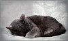Sweet Sleep (ReneYoshi) Tags: pet cat canon rebel nap peace sleep explore cover trophy 24105mm beautyisintheeyeofthebeholder commentonmycuteness xti abigfave bestofcats citrit calculatingcatsinbw photostosmileabout