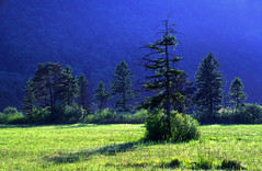 Schaanwald (gregor H) Tags: morning trees forest landscape liechtenstein sidelight schaanwald