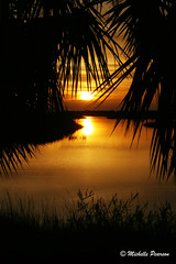 Cedar Key Sunset (MickiP65) Tags: travel trees sunset vacation sky orange usa sun fish reflection tree tourism gulfofmexico nature water canon reflections photography gold golden evening coast us fishing photographer gulf florida getaway framed 2006 palmtrees creation palmtree frame mostinteresting northamerica oysters fl framing crabs quaint fla cedarkey levy allrightsreserved fishingvillage crabbing gulfcoast copyrighted cedarkeyfl michellepearson theloveshack naturecoast proudshopper mickip mickip65 cedarkeyphotographer cedarkeyphotography
