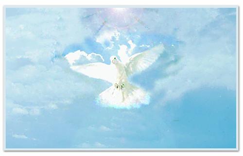 dove - sky