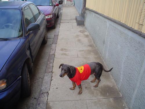patrullando las calles de buenos aires