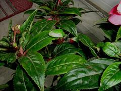 IMG_0645         Green Bug! - by marilynnm63
