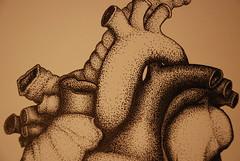 DSC_0013 (jreidfive) Tags: detail illustration pen ink virginia heart drawing medical roanoke stipple anatomical