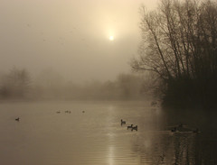 Mill farm morning (Mr Grimesdale) Tags: mist lake reflections sony ducks tranquil morningmist knowsley kirkby capitalofculture mrgrimsdale stevewallace capitalofculture2008 liverpoolcapitalofculture2008 dsch2 europeancapitalofculture2008 millfarm photofaceoffwinner liverpoolcapitalofculture pfogold mrgrimesdale grimesdale