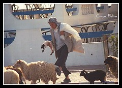 Shepherd & sheep on ferry (Carpe Feline) Tags: africa ferry sheep northafrica tunisia shepherd tunis mediterrean carpefeline