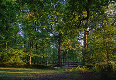Evening Gate - I (Skink74) Tags: uk trees light shadow england tree 20d evening woods gate hampshire newforest hdr efs1785mmf456isusm eos20d 3xp longcross fdrtools subtlehdr canon1785f456