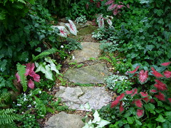 Stone path through shade garden lined with caladiums (pawightm (Patricia)) Tags: austin texas caladium gardenpath texashillcountry shadegarden stonepath centraltexas limestonepath whitequeencaladium pawightm nativestonepath freidahemplecaladium floridasweetheartcaladium whitewingscaladium ss857063
