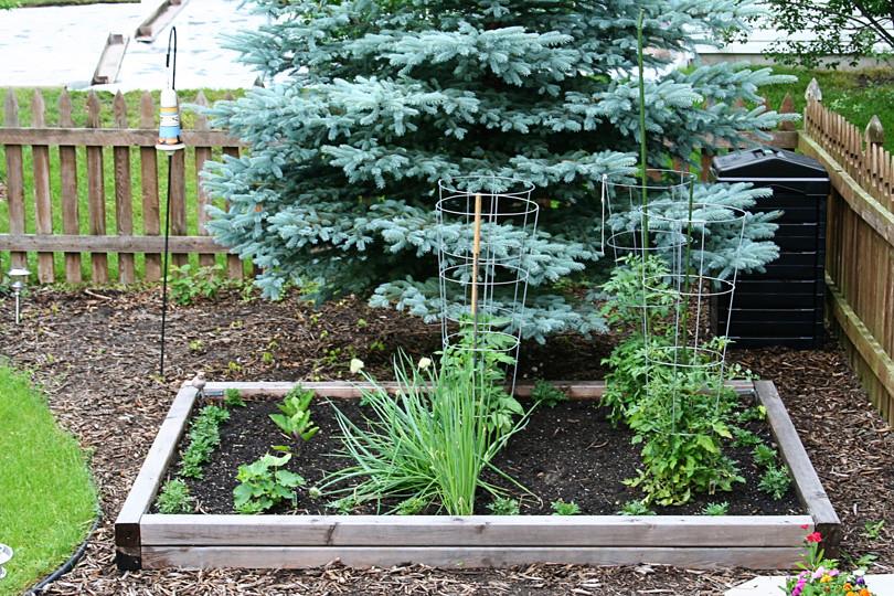 Veggie Garden 6.13.10