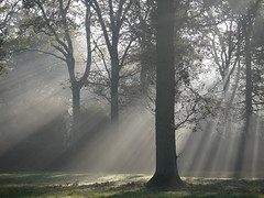 Misty rays (yvonnepay615) Tags: uk mist nature woodland lumix woods norfolk panasonic sandringham g1 sunrays eastanglia 45m flickraward treesdiestandingup flickrawardgallery pinnaclephotography