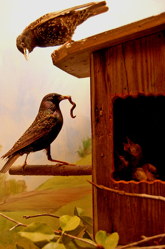 Bird family in Birdhouse Diorama