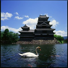 Swan and Matsumoto-jo (HASSELBLAD 500C/M) (potopoto53age) Tags: fish bird castle 120 6x6 film water birds japan 50mm swan hasselblad brownie fujifilm carp moat matsumoto fujichrome nagano nationaltreasure distagon fortiasp hassel carlzeiss hasselblad500cm japanesecastle matsumotojo supershot wowiekazowie superhearts excellentphotographerawards carlzeissdistagon50mmf4 betterthangood