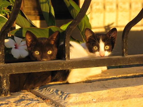 Stray Cats, Kusadasi