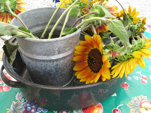 Sunflowers, growers market, Albuquerque, NM, July 2007, photo © 2007 by QuoinMonkey. All rights reserved.