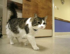 Oscar the psychic cat