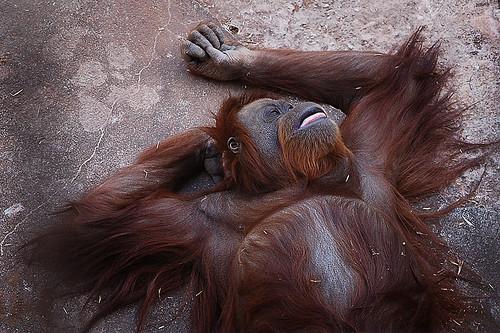 Macaco de ressaca