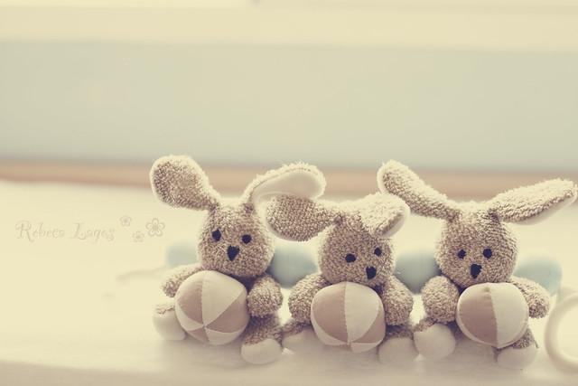 Bunnies (158/365)