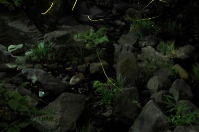 空中庭園 蛍