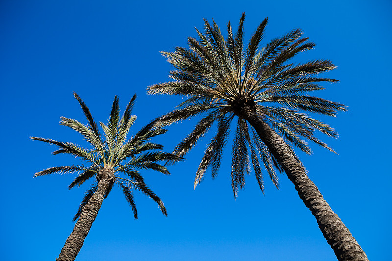 Barcelone - Palmiers