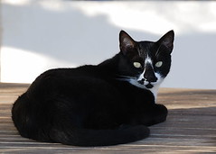 Koutsounari - Barbaras Apartments - Katze (margaretha_hopfner - 700.000+views) Tags: cats pets kreta crete katzen haustiere kriti nikond80 koutsounari