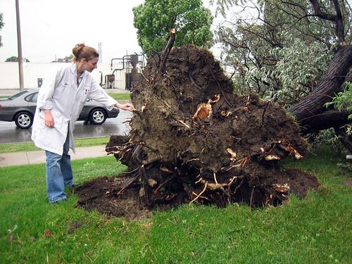 Poor Tree2