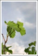 Verde (Antonio MR) Tags: verde green canon spain calafell ltytr1 efectoorton