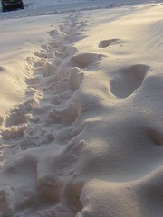 Steps on Snow (pchowhan) Tags: sony digi