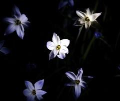 Small flowers (rogergordon) Tags: digital southafrica experimental raw johannesburg gauteng