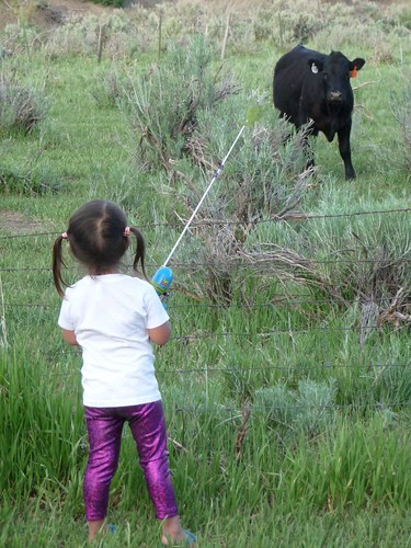 fishing for cows.