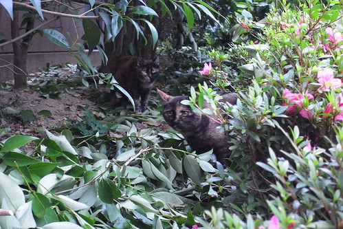 Today's Cat@2010-06-08